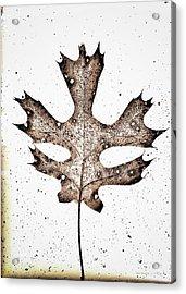 Vintage Leaf Acrylic Print
