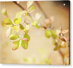 Vintage Leaves Acrylic Print by Rebecca Robinson