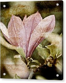 Vintage Magnolia Acrylic Print by Frank Tschakert