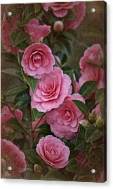 Vintage March 2017 Camillias No. 2 Acrylic Print by Richard Cummings