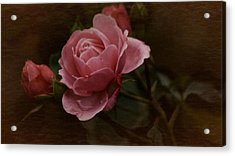 Acrylic Print featuring the photograph Vintage October Pink Rose by Richard Cummings