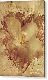Vintage Paper Magnolia Acrylic Print