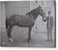 Vintage Photograph 1902 Horse With Handler New Bern Nc Area Acrylic Print by Virginia Coyle