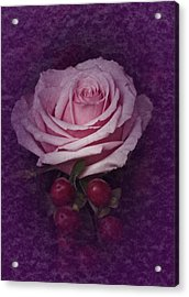 Vintage Pink Rose Feb 2017 Acrylic Print by Richard Cummings