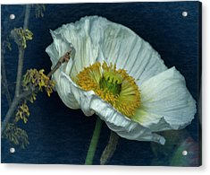 Vintage Poppy 2017 No. 2 Acrylic Print by Richard Cummings