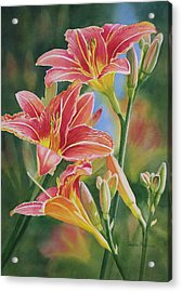 Vintage Red Orange Lilies Acrylic Print