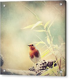 Vintage Robin 2 Acrylic Print by Heike Hultsch