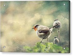 Vintage Robin Acrylic Print by Heike Hultsch