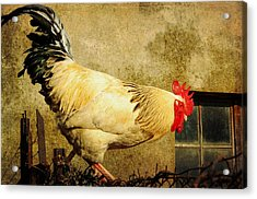 Vintage Rooster Acrylic Print by Gary Smith