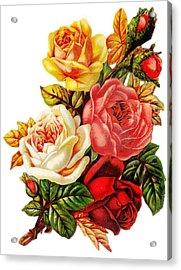 Vintage Rose I Acrylic Print