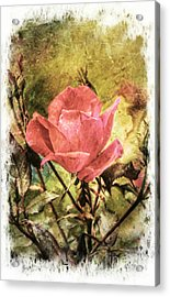 Vintage Rose Acrylic Print by Tina  LeCour