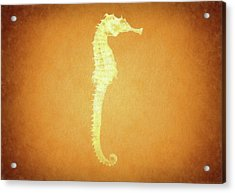 Vintage Seahorse Acrylic Print by Dan Sproul