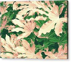 Vintage Season Pink Acrylic Print by Rebecca Harman