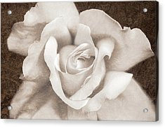 Acrylic Print featuring the photograph Vintage Sepia Rose Flower by Jennie Marie Schell
