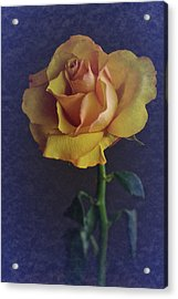 Vintage Single Rose Acrylic Print by Richard Cummings