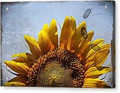 Vintage Sunflower- Fine Art Acrylic Print