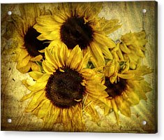 Vintage Sunflowers Acrylic Print by Wallaroo Images