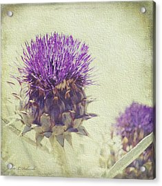 Vintage Thistle Acrylic Print by Laura Palazzolo