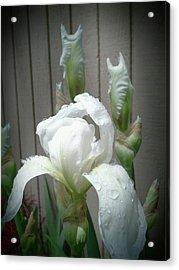 Vintage White Iris Acrylic Print