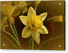 Vintage Yellow Narcissus Acrylic Print by Richard Cummings