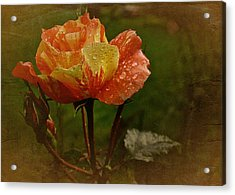 Vintage Sunset Rose Acrylic Print
