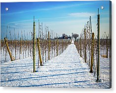Vinyard On Down Road  Acrylic Print