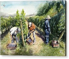 Vineyard Watercolor Acrylic Print by Olga Shvartsur