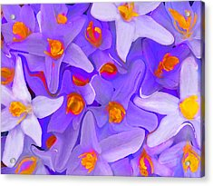 Viola Molti Acrylic Print by Robert OP Parrish