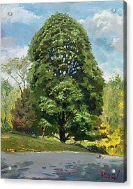 Viola S Tree Acrylic Print