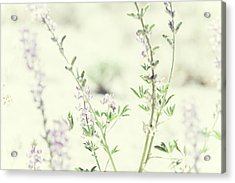 Violet And Green Bloom Acrylic Print by Amyn Nasser