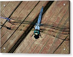 Violet Dancer On A Great Blue Skimmer Acrylic Print by Susan Isakson