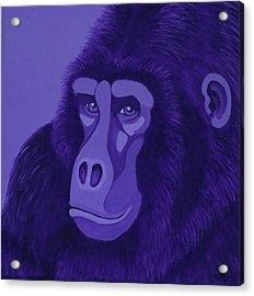 Violet Gorilla Acrylic Print