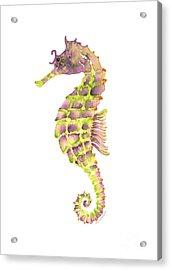 Violet Green Seahorse Acrylic Print by Amy Kirkpatrick