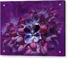 Violet Lilac Acrylic Print