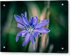 Acrylic Print featuring the photograph Violet by Michaela Preston