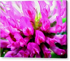 Violet Acrylic Print by Molly McPherson