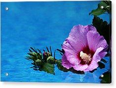 Violet Satin Acrylic Print