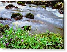 Violets Along Hazel Creek Acrylic Print by Alan Lenk