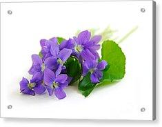 Violets On White Background Acrylic Print by Elena Elisseeva