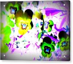 Violets Acrylic Print by Pauli Hyvonen