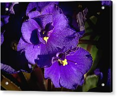Acrylic Print featuring the photograph Violets by Phyllis Denton