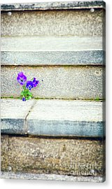 Acrylic Print featuring the photograph Violets    by Silvia Ganora