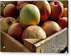 Virginia Apples  Acrylic Print