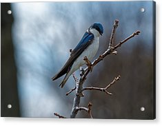 Vision In Blue Acrylic Print