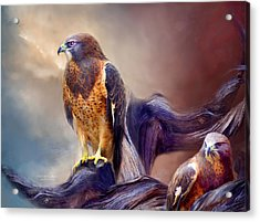 Vision Of The Hawk 2 Acrylic Print