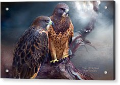 Vision Of The Hawk Acrylic Print
