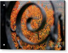 Vision Acrylic Print by Sheila Ping