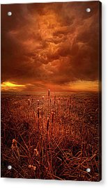 Vision Softly Speaking Acrylic Print by Phil Koch