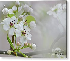 Visions Of White Acrylic Print