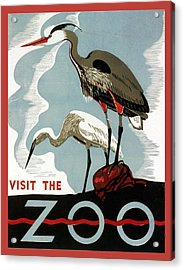 Visit The Zoo Egrets  Acrylic Print by Unknow